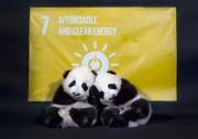 熊猫绿能发布联合国特制电站 并与WWF签署合作协议